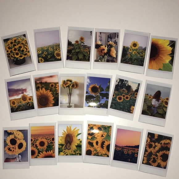 Accessories Tumblr Sunflower Polaroid Pictures Poshmark